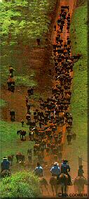 Photo - Cattle drive
